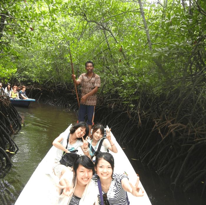 海の森といわれるマングローブ