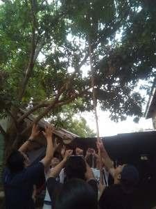 森のマンゴー取り